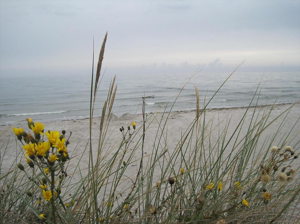Morgendlicher Strand und Ostsee Insel Hiddensee