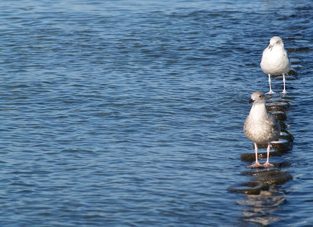 Möwen am Strand von Hiddensee